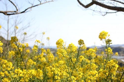 そろそろ春!!春キャンプの楽しみ方は、自然の鼓動を感じることにあり!