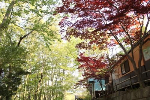 埼玉県秩父郡 長瀞オートキャンプ場