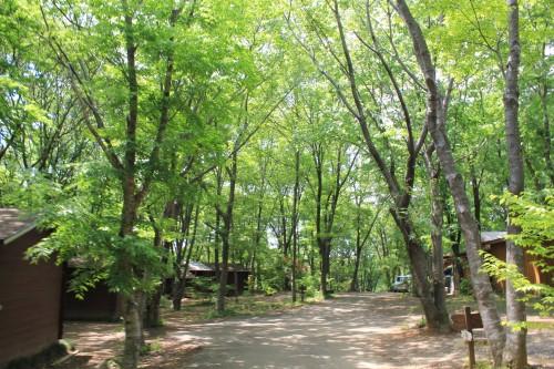 東京から1時間のキャンプ場、フォンテーヌの森