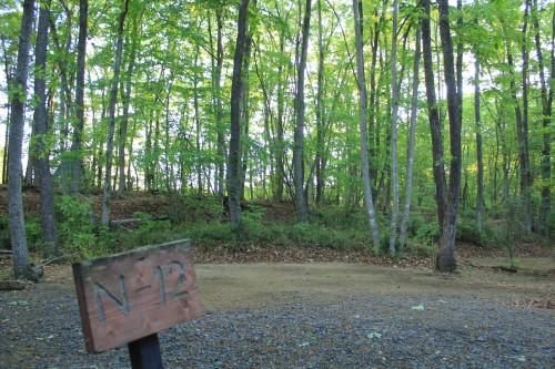 林間サイト。5月〜6月の新緑が気持ちいい。