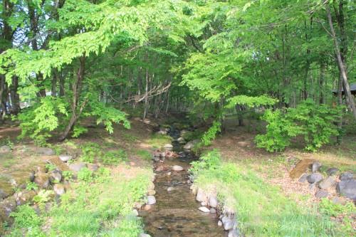 場内は林で、小川が流れています。
