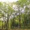 茨城県 城里ふれあいの里 2014年5月24日〜25日(photo)
