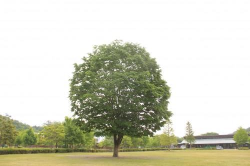 茨城県 大子広域公園 グリンヴィラ 2014年5月27日〜29日(photo)