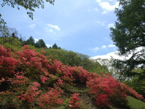 赤城山麗 キャンプ場【県営赤城山キャンプ場・赤城少年自然の家・バンガロー森の家】