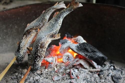 川魚は腹から焼く