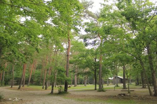 キャンプ場景観