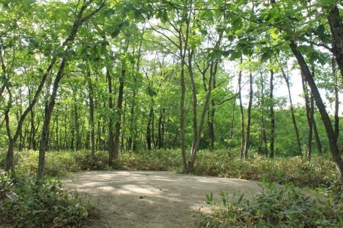 林間サイトで地面は水はけの良い砂