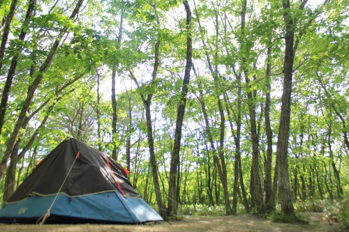 福島県 羽鳥湖高原レジーナの森