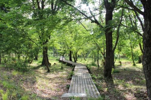 山形県 いこいの森キャンプ場 6月27日