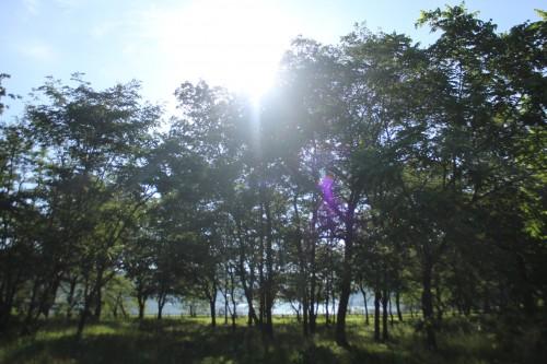 宮城県 エコキャンプみちのく 2014年6月21日〜24日(photo)
