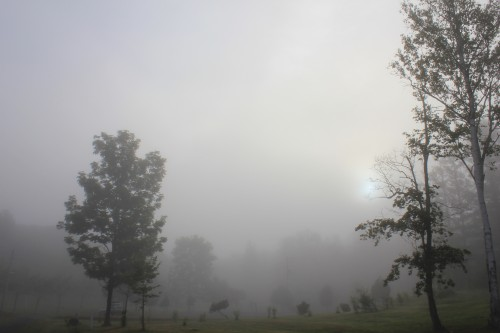 リンリン公園キャンプ場の朝靄の写真