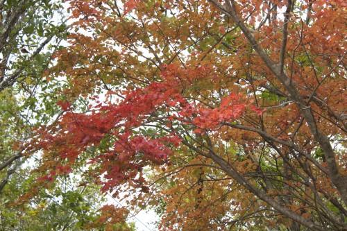 秋の夜長のキャンプは最高!!秋キャンプを楽しむために注意すべき3つのこと!〜初心者のためのキャンプ入門〜