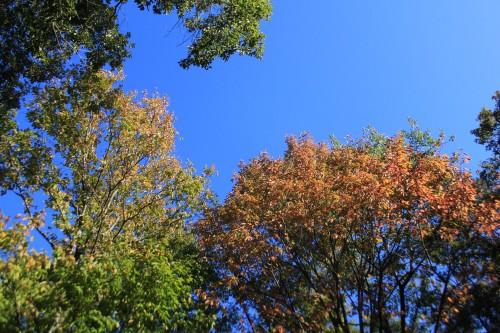 石川県 森林公園三国山キャンプ場 2014年10月17日〜18日