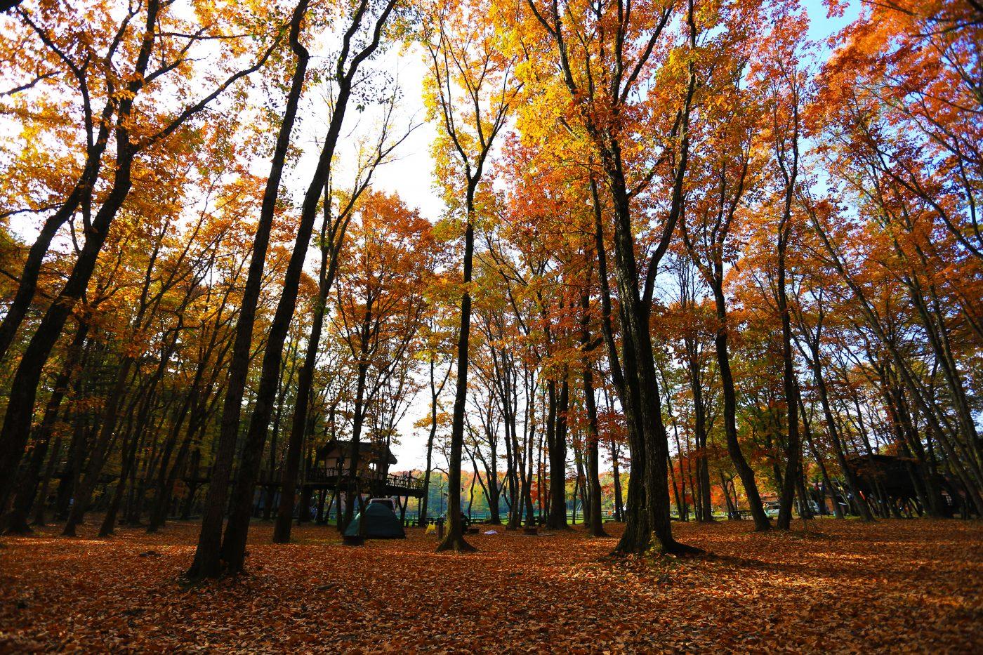 秋冬は本当に暖かい格好でキャンプに行きましょう。