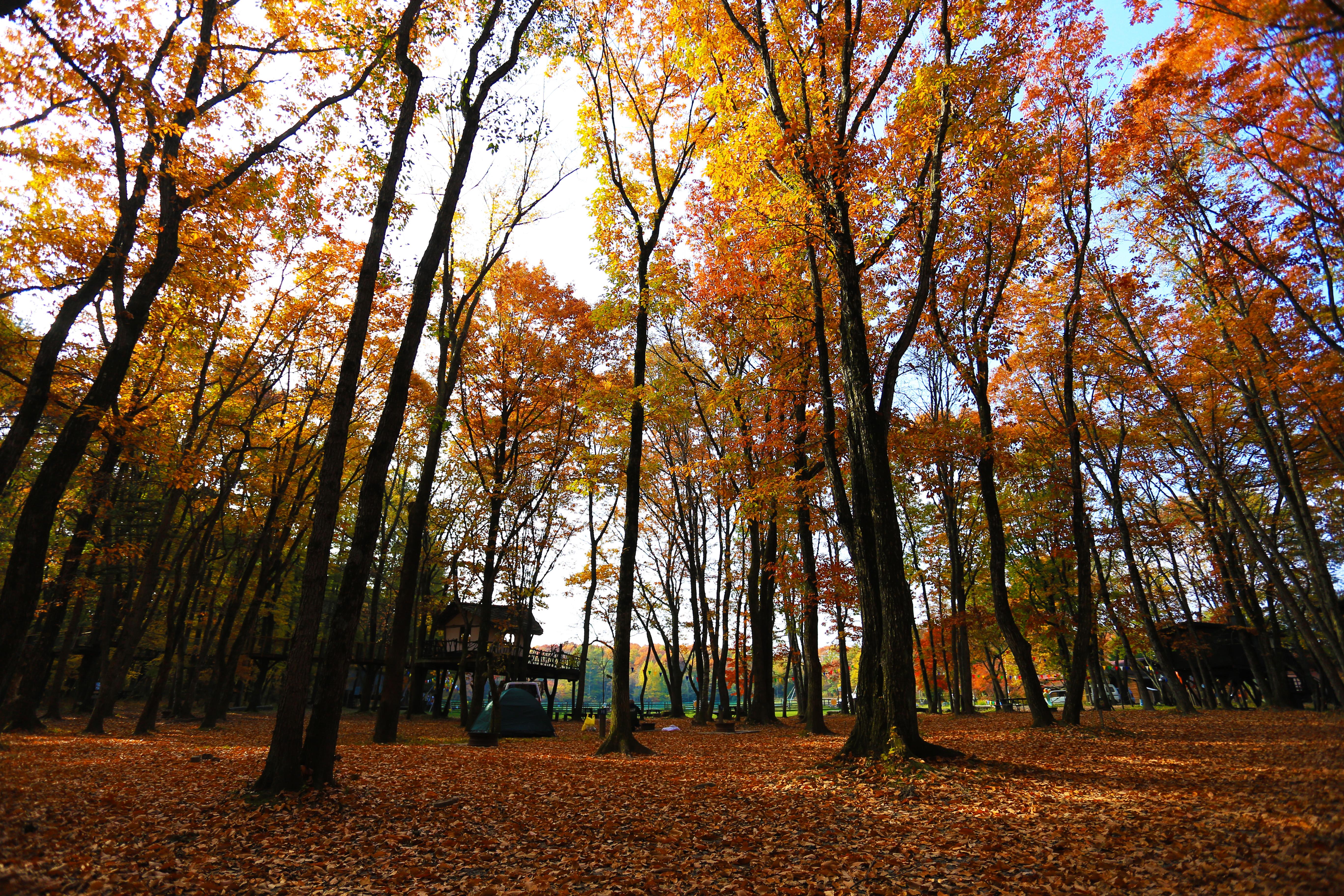 秋は焚き火も楽しいし、紅葉も楽しめて凄くオススメの時期。でも装備をしっかりしないと厳しいです。