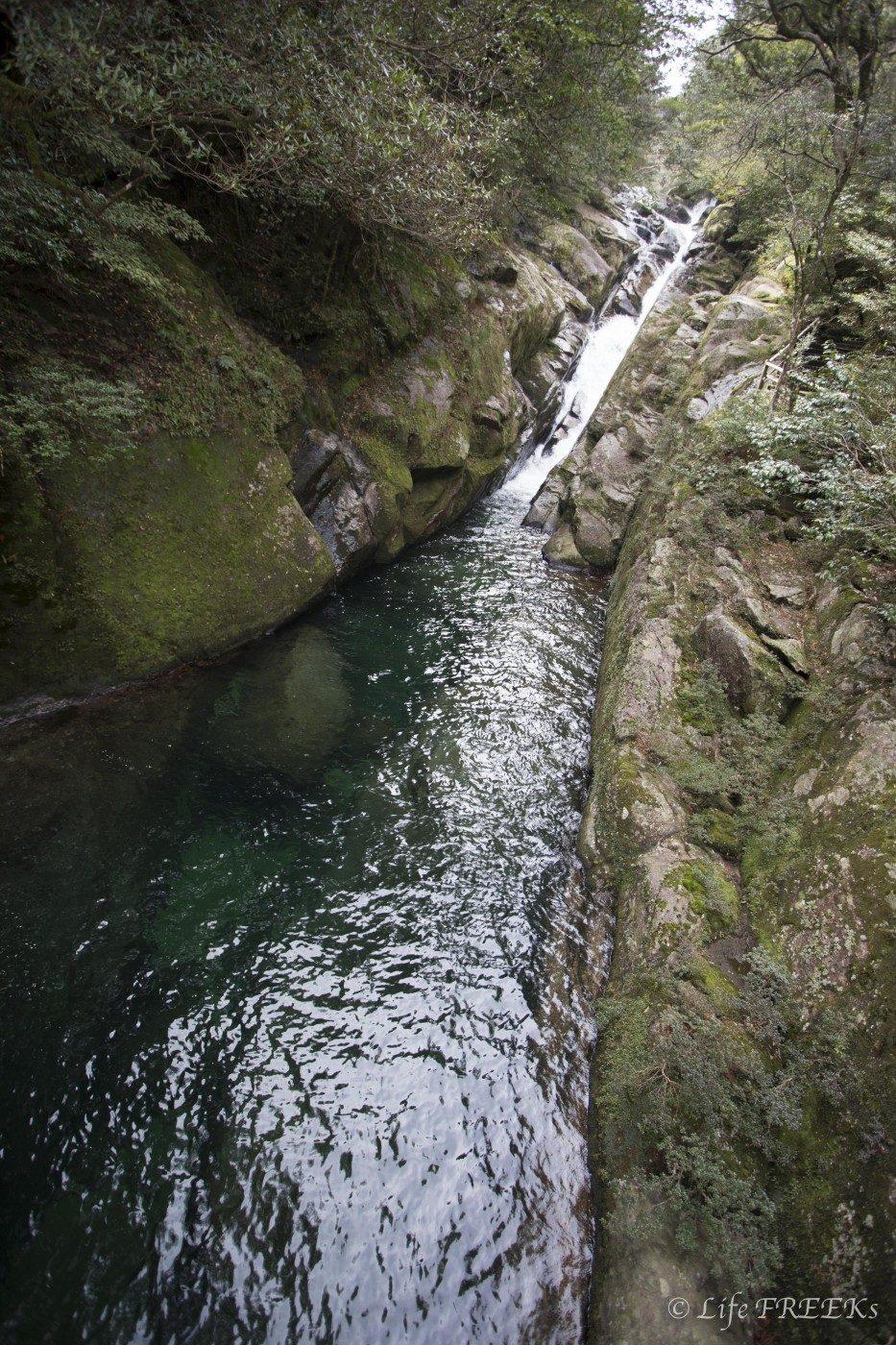 水のきれいな川周辺にブヨは生息しています。