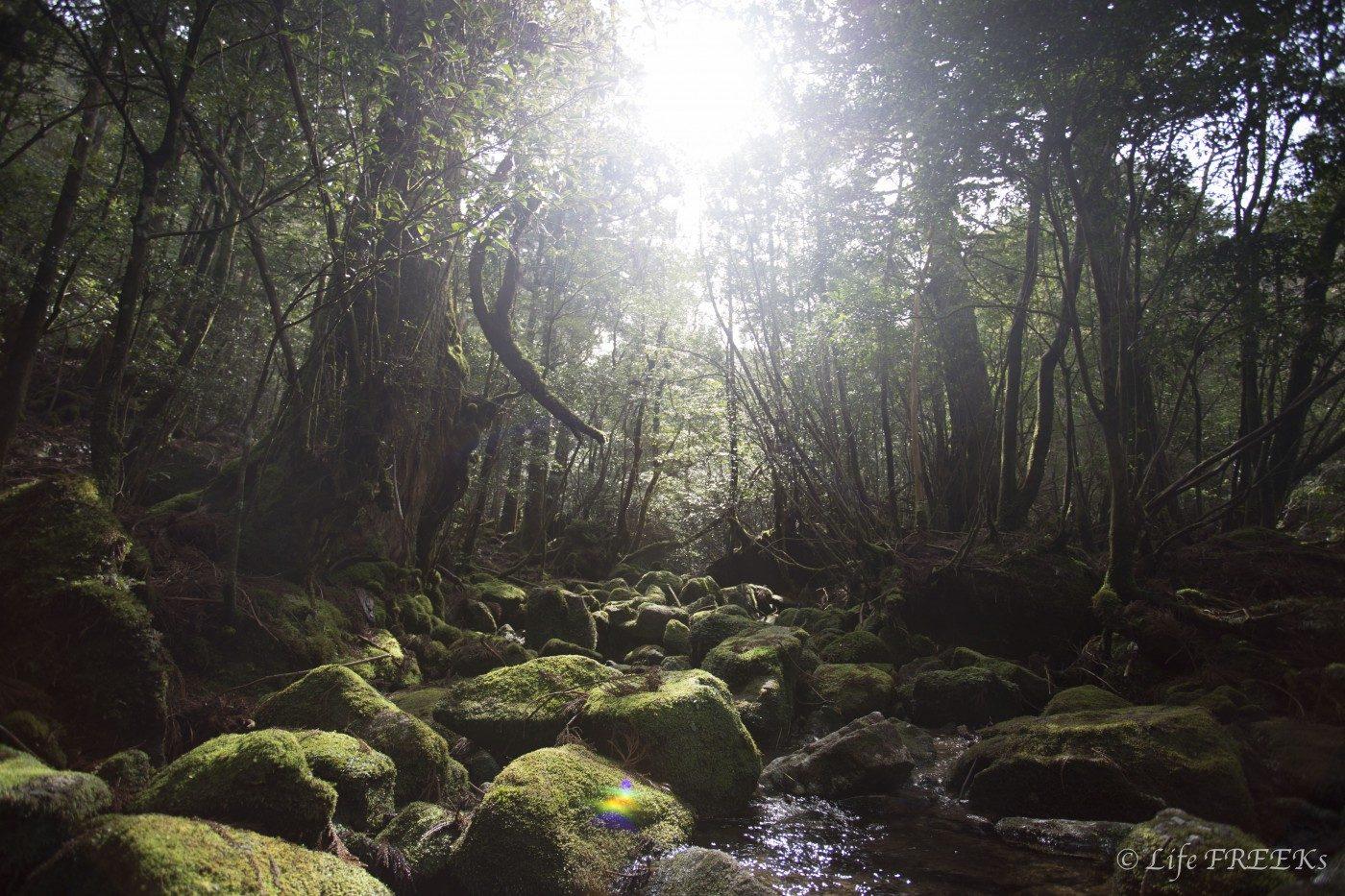 キャンプの魅力のひとつは自然にある。