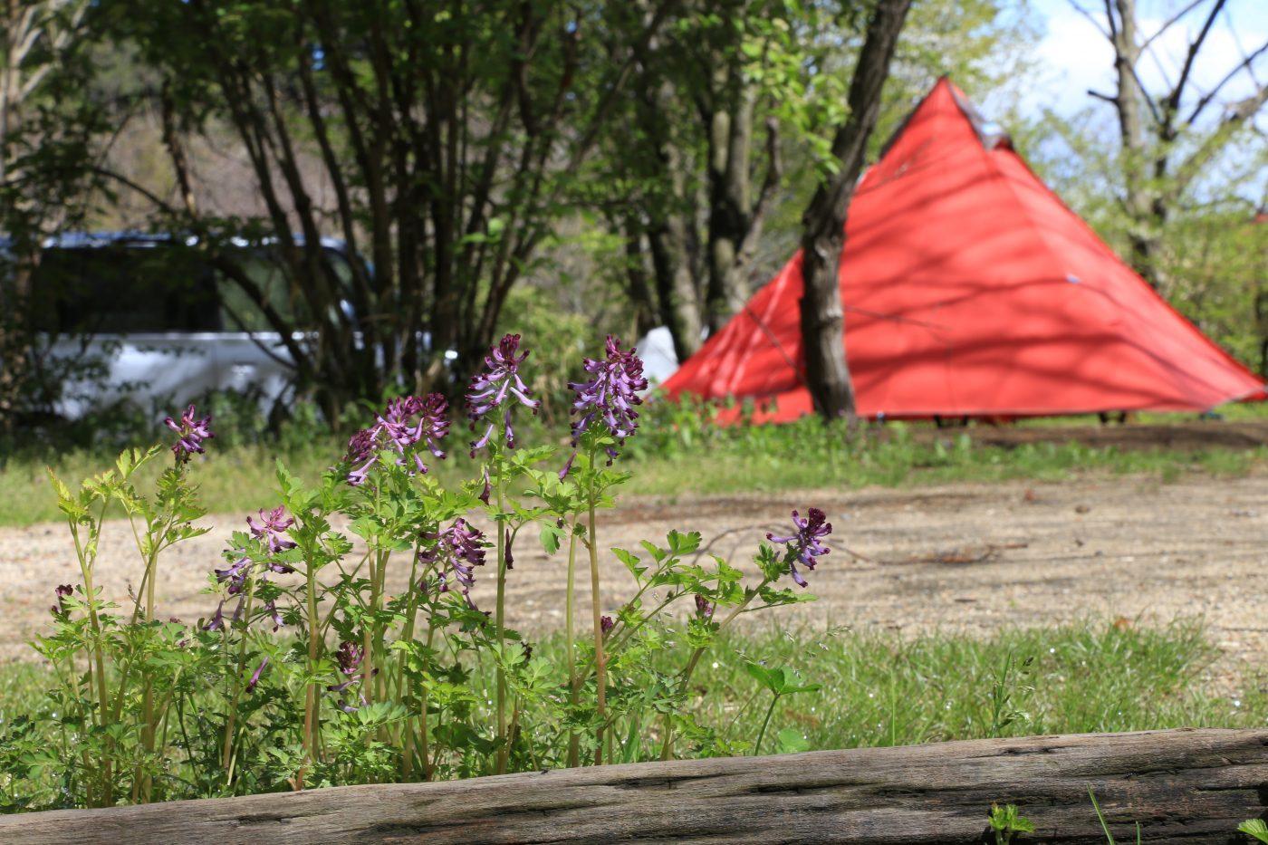 春キャンプも夜は冷え込みます。