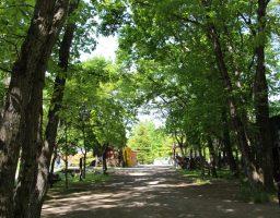 好きなキャンプ場の条件「キャンプ場が整っているか」-ガルボ編