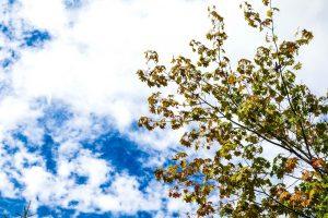 【初秋キャンプ】9月〜10月のキャンプは思いの外昼と夜の温度差がすごいので気をつけてね!