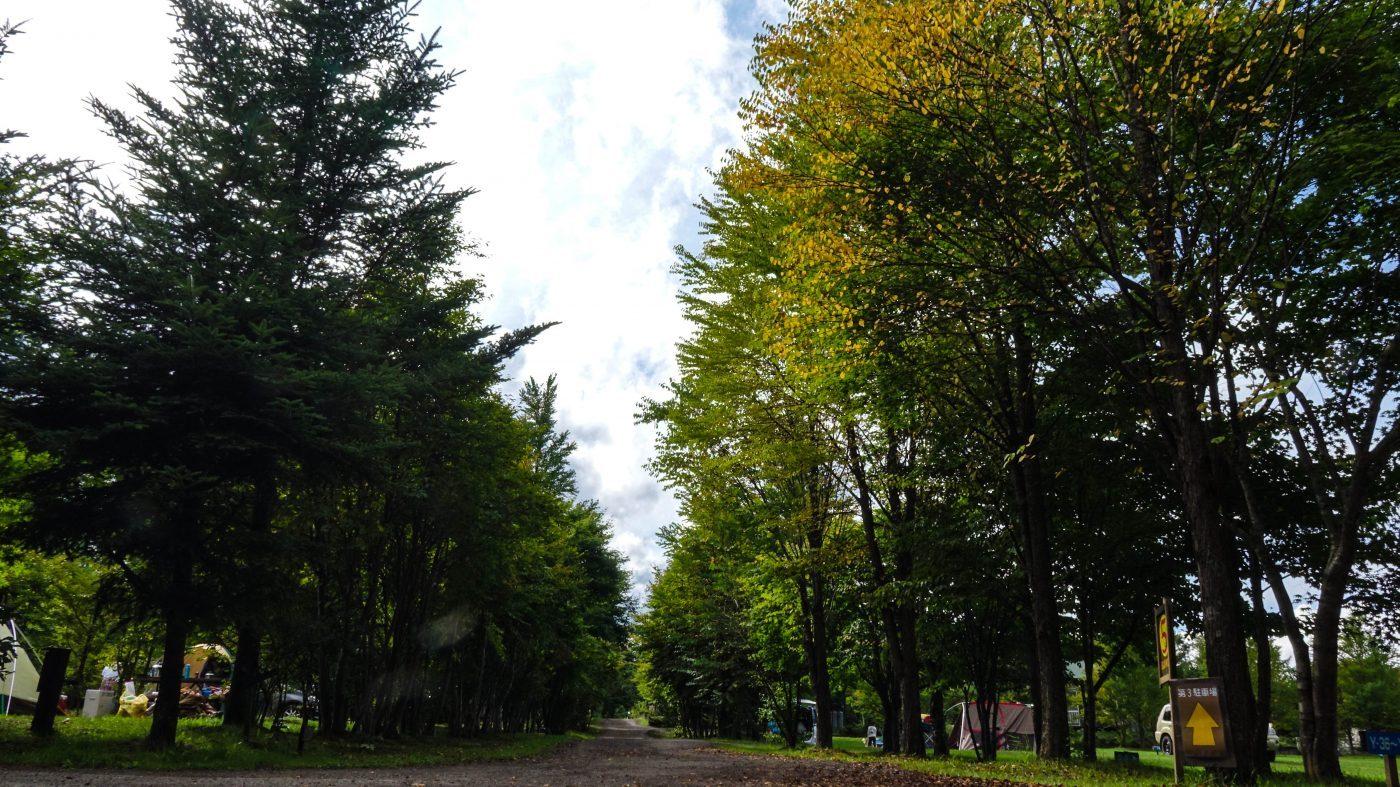 これから10月にかけて紅葉が進んでいきます。