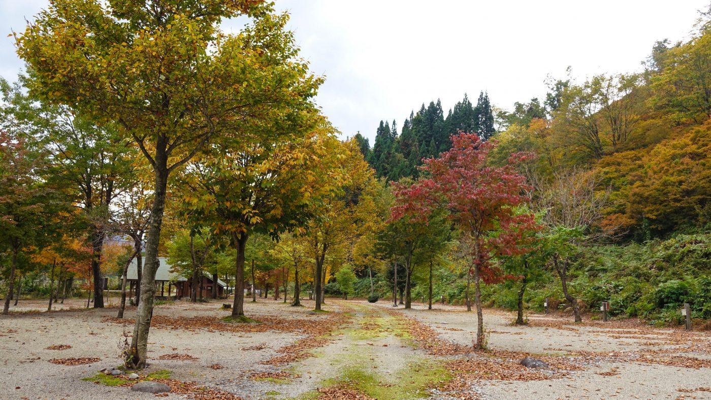 白い森オートキャンプ場キャンプ場の風景