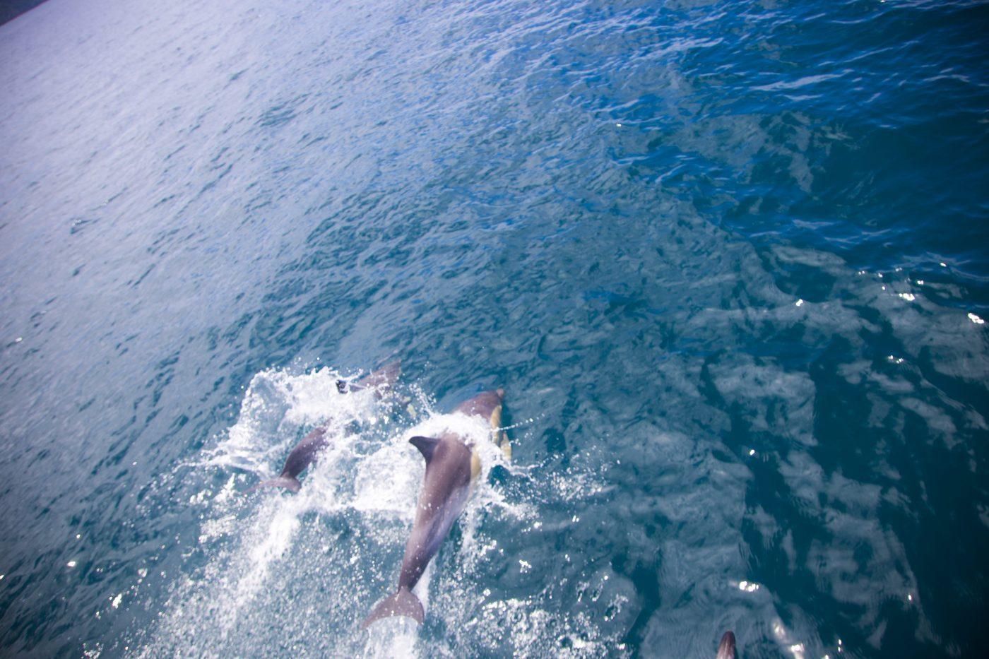 イルカも見れるニュージーランド