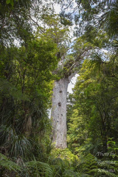 Kauri Coast Top 10 Holiday Park20