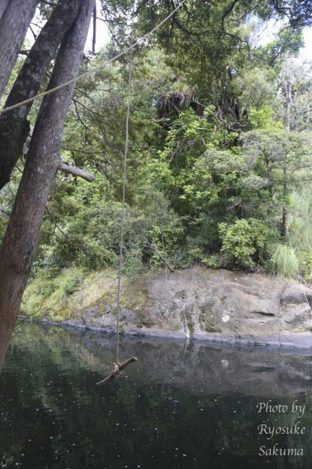 Kauri Coast Top 10 Holiday Park18