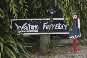 Waitomo Farmstayはワイトモケーブに行った後に泊まる格安キャンプ場