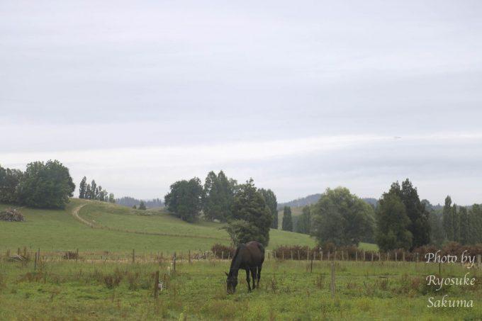 Waitomo Farmstay21