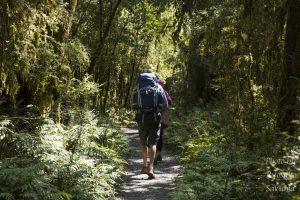 【3泊4日トレッキング】さくぽんのニュージーランド南島キャンプ旅日記19日目〜20日目