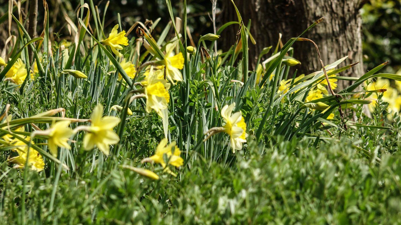 春のキャンプ場には花が沢山