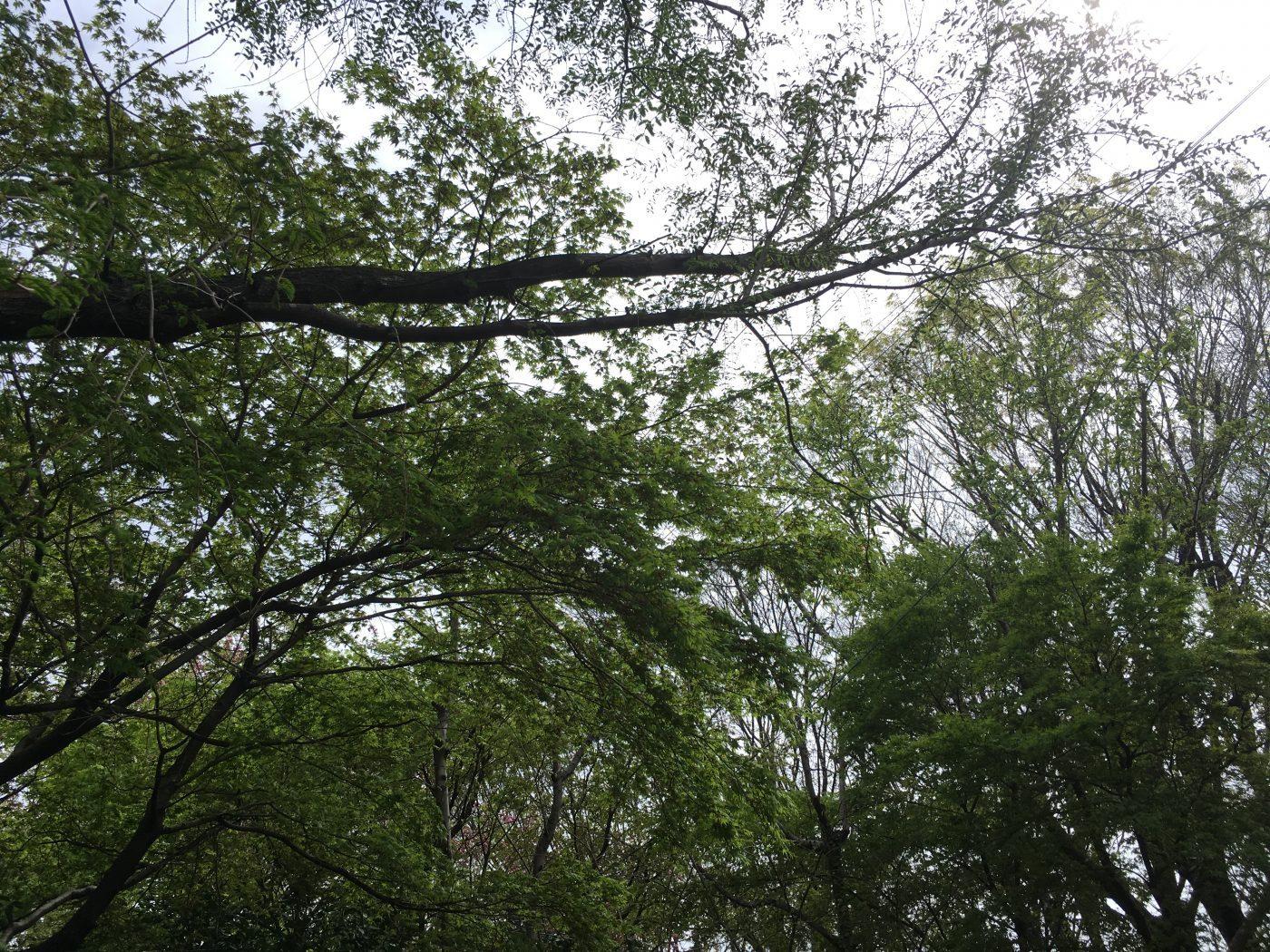 今日(4/18)の有野実苑オートキャンプ場。一気に新芽が開いて、緑がきれいに。