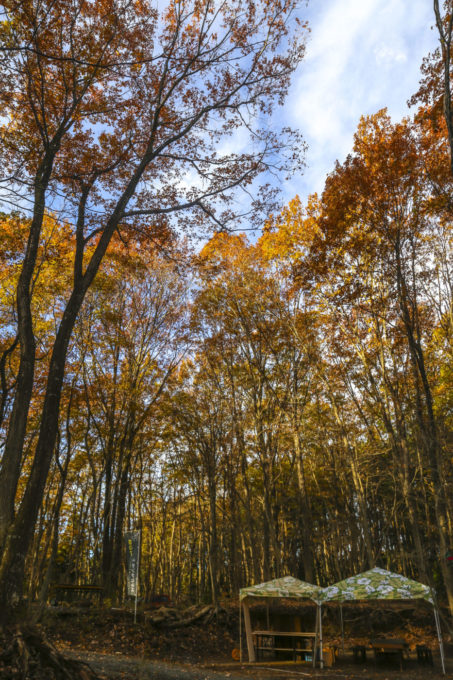 森のアートフェスタ5