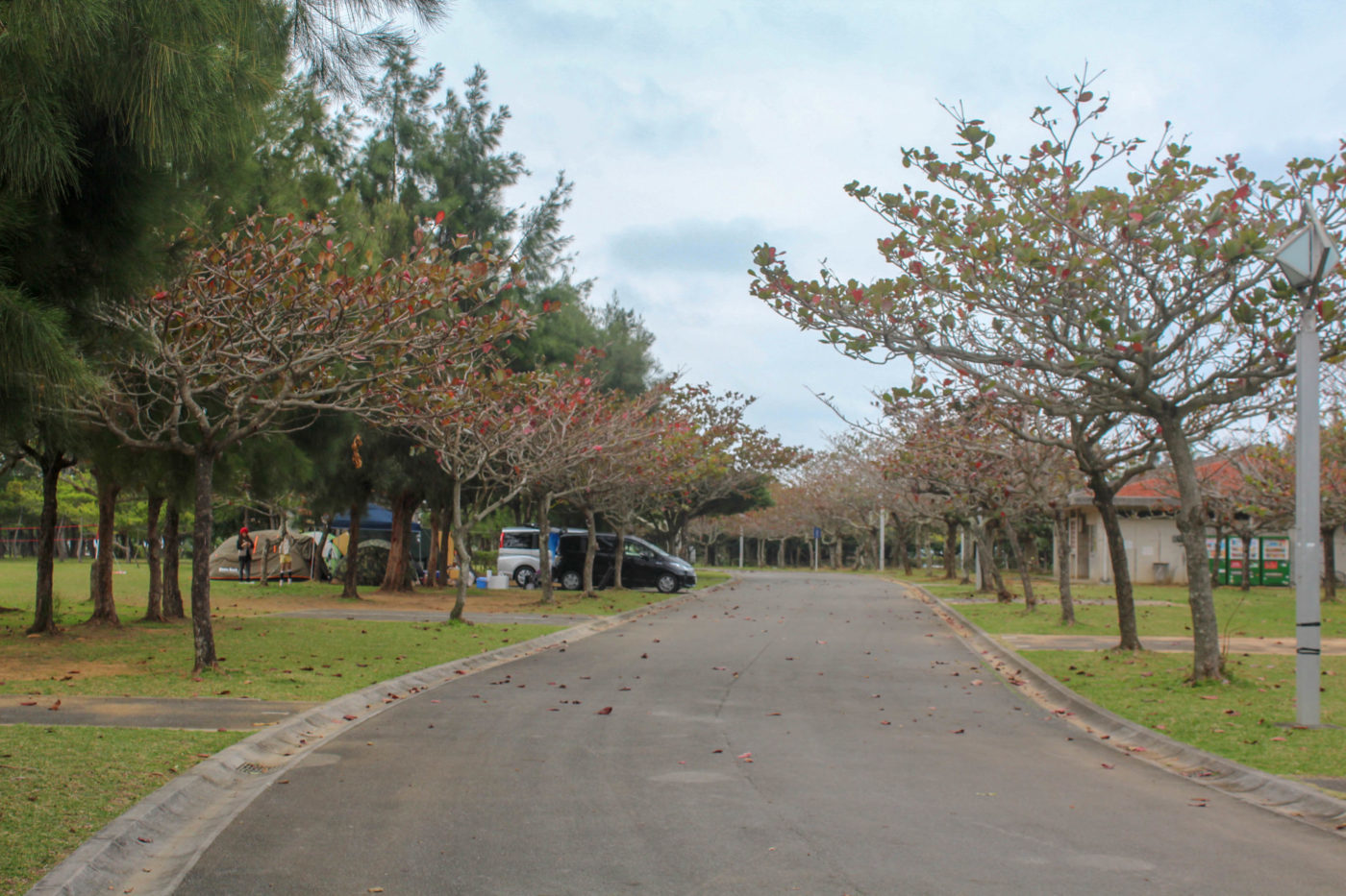 2月中旬の沖縄県総合公園オートキャンプ場内の様子。道路の両脇に区画型のオートサイトが並ぶ。