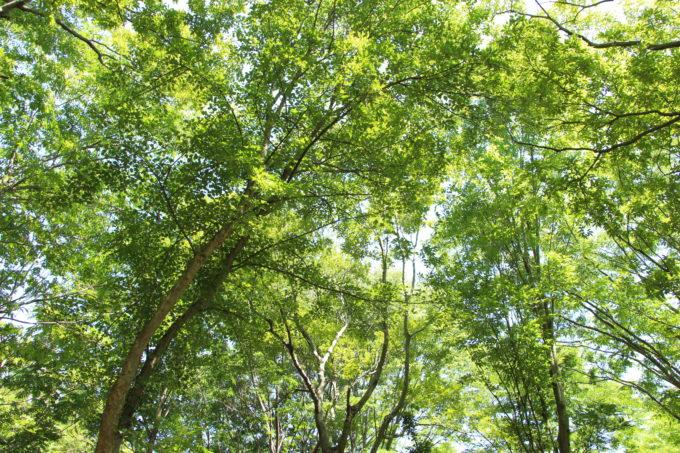 キャンプ場は新緑がとても綺麗